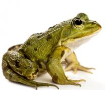 A Virtual Animal Show: Frogs, Bugs & Animals