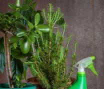 Indoor Plants for Improved Air Quality